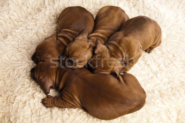собаки мало собака ребенка молодые грусть Сток-фото © JanPietruszka