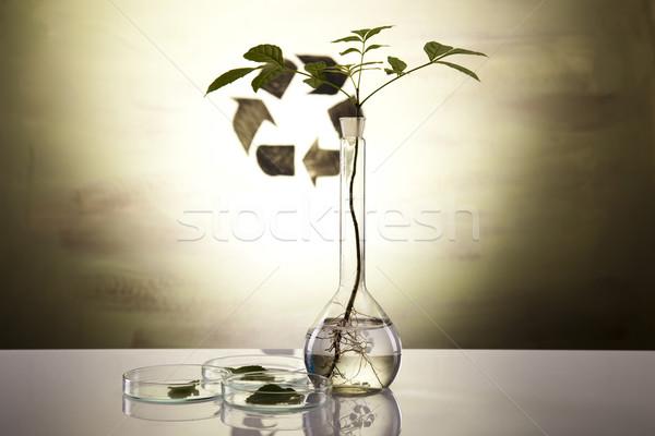 Flora laboratorium medische glas geneeskunde plant Stockfoto © JanPietruszka