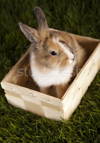 Bunny in grass  Stock photo © JanPietruszka
