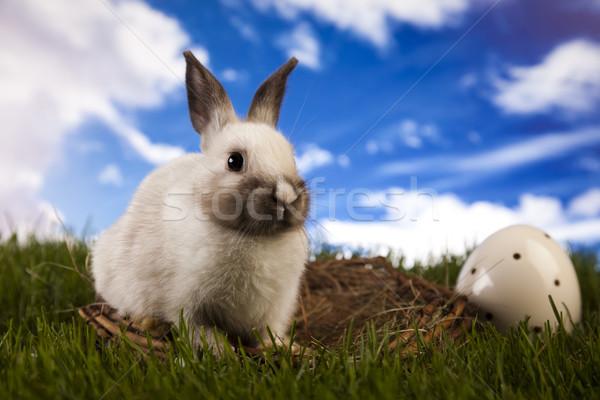 Baby bunny and green grass Stock photo © JanPietruszka