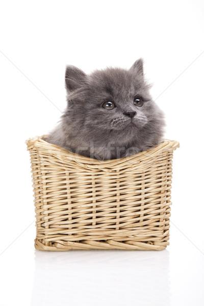 Klein grijs kitten cute huisdier kleurrijk Stockfoto © JanPietruszka
