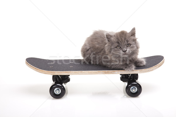 Little gray kitten, cute pet colorful theme Stock photo © JanPietruszka