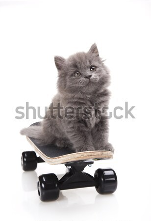 Skateboard, Little gray kitten, cute pet colorful theme Stock photo © JanPietruszka