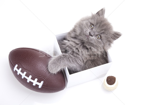 Kitten on a white background, cute pet colorful theme Stock photo © JanPietruszka