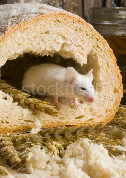 Traditional bread, vivid colors, natural tone Stock photo © JanPietruszka