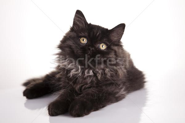 Funny kitten  Stock photo © JanPietruszka
