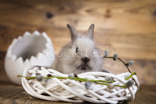 Easter, bunny  Stock photo © JanPietruszka