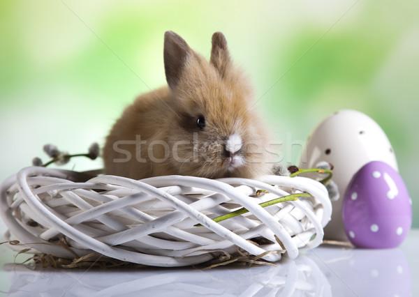 Bunny Stock photo © JanPietruszka