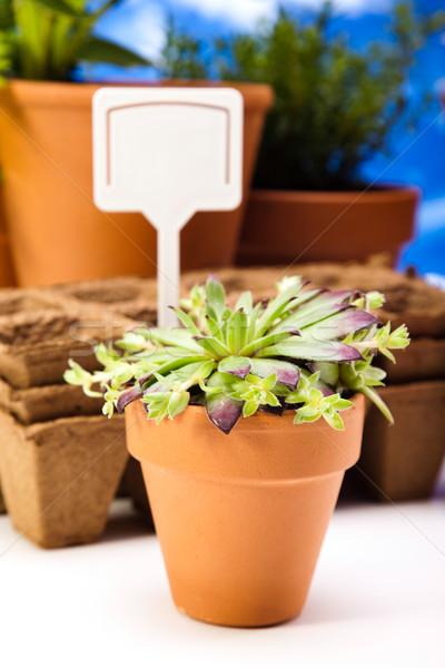 Gardening time, garden, vivid bright springtime concept Stock photo © JanPietruszka