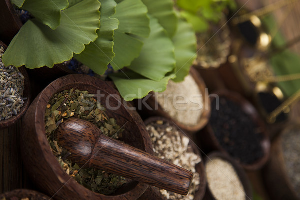 Ginkgo,maidenhair tree, Natural remedy Stock photo © JanPietruszka