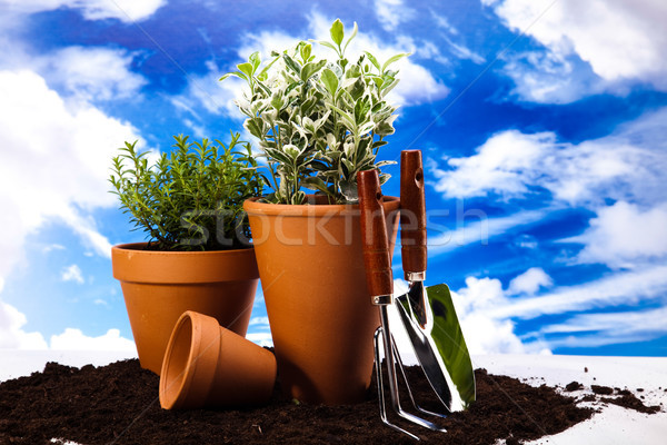 Flowers and garden tools on blue sky background Stock photo © JanPietruszka
