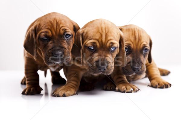 Stok fotoğraf: Bebek · köpekler · küçük · köpek · genç · üzüntü