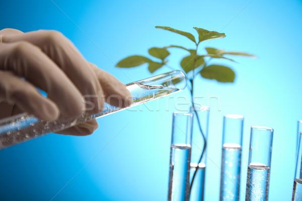 Virágmintás tudomány laboratórium újrahasznosítás növény természet Stock fotó © JanPietruszka