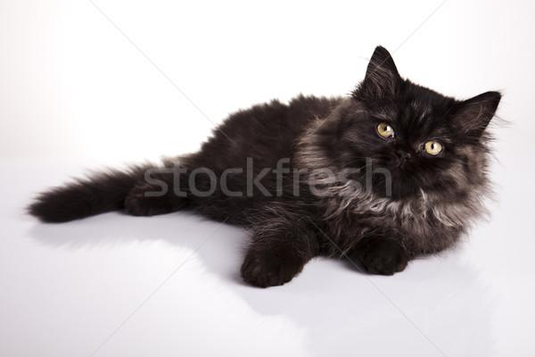 Pisi komik kedi yavrusu göz kediler hayvan Stok fotoğraf © JanPietruszka