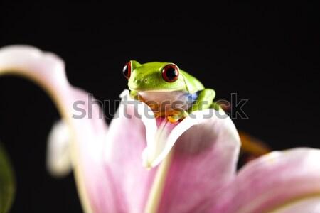 Boomkikker kleurrijk natuur Rood kikker tropische Stockfoto © JanPietruszka