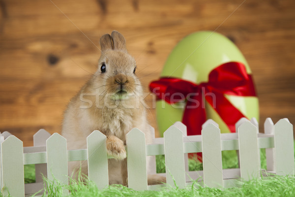 кролик пасхальных яиц ребенка Bunny яйцо Сток-фото © JanPietruszka