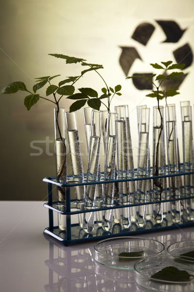Eco laboratorium natuur geneeskunde plant lab Stockfoto © JanPietruszka