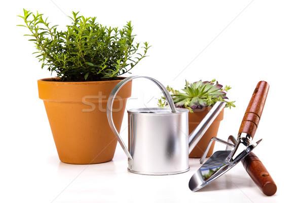 Tuinieren uitrusting planten levendig heldere Stockfoto © JanPietruszka
