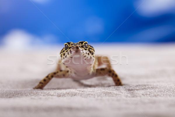 ヤモリ 青空 眼 徒歩 白 動物 ストックフォト © JanPietruszka