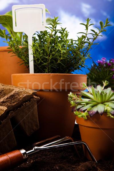 набор саду инструменты яркий ярко весна Сток-фото © JanPietruszka