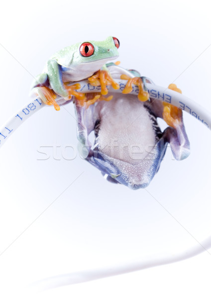 Stock photo: Exotic frog on colorful background