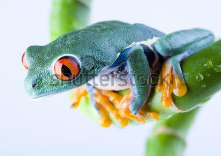 Chameleon jasne żywy egzotyczny klimat kwiat Zdjęcia stock © JanPietruszka