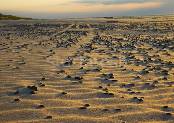 砂 自然 美しい 風景 ビーチ ストックフォト © JanPietruszka