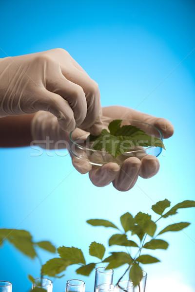 Plant laboratory Stock photo © JanPietruszka