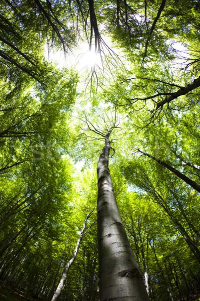 Leaves, saturated tone natural theme Stock photo © JanPietruszka