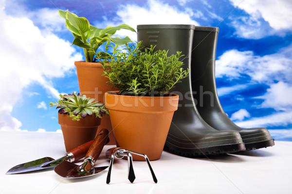 Garden plant, vivid bright springtime concept Stock photo © JanPietruszka