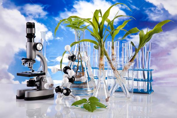 Stok fotoğraf: Laboratuvar · züccaciye · bitki · cam · tıp · bilim