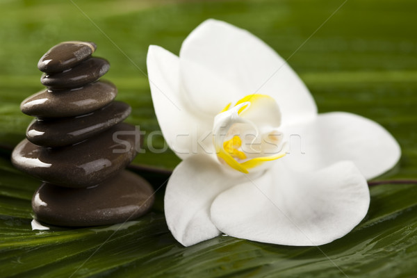 Equilibrado zen piedras ambiente grupo Foto stock © JanPietruszka
