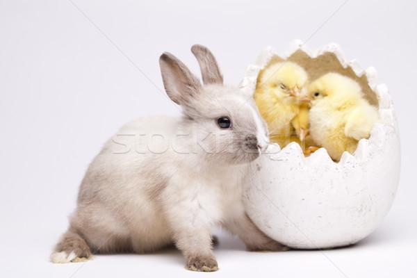 Csirke nyuszi húsvét állat ünnep legelő Stock fotó © JanPietruszka