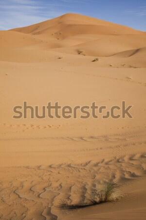 Sand Desert with Dunes in Marocco, merzouga Stock photo © JanPietruszka