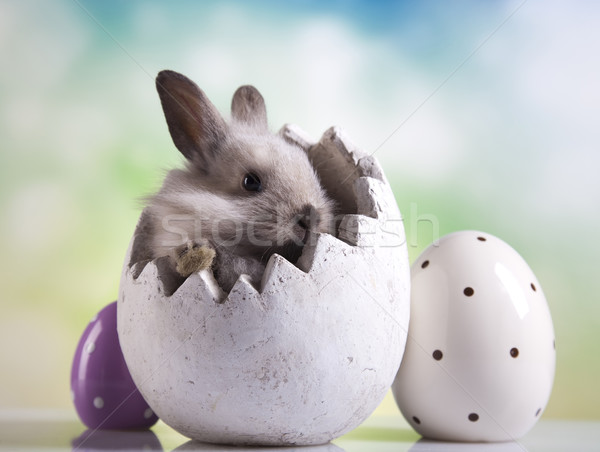 Happy easter, Little bunny Stock photo © JanPietruszka