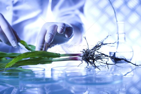 Zdjęcia stock: Nauki · eksperyment · roślin · laboratorium · medycznych · szkła