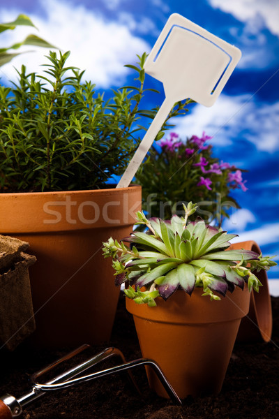 Kertészkedés élénk fényes tavasz fű természet Stock fotó © JanPietruszka