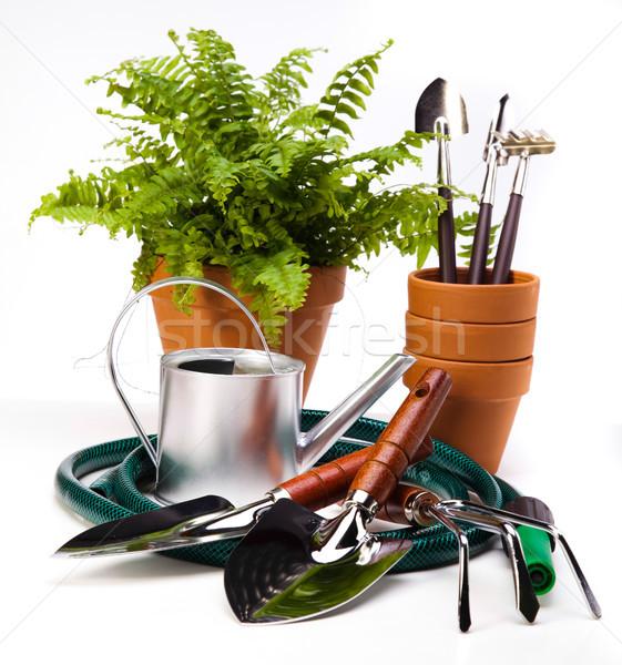 Assorted gardening, vivid bright springtime concept Stock photo © JanPietruszka