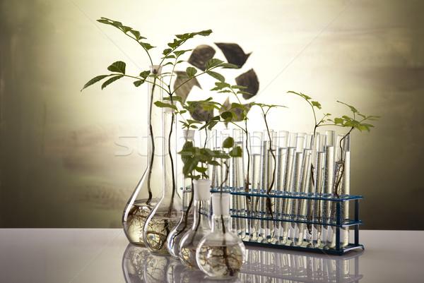 Eco laboratory  Stock photo © JanPietruszka