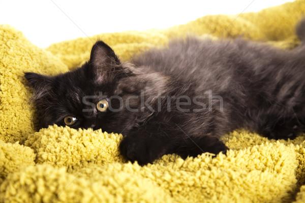 Poesje grappig kitten oog katten dier Stockfoto © JanPietruszka