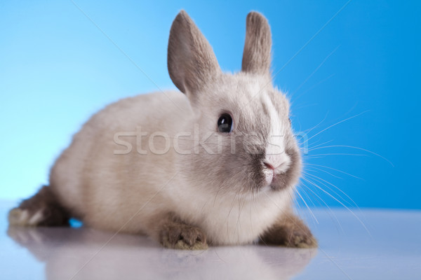 Easter Bunny  Stock photo © JanPietruszka