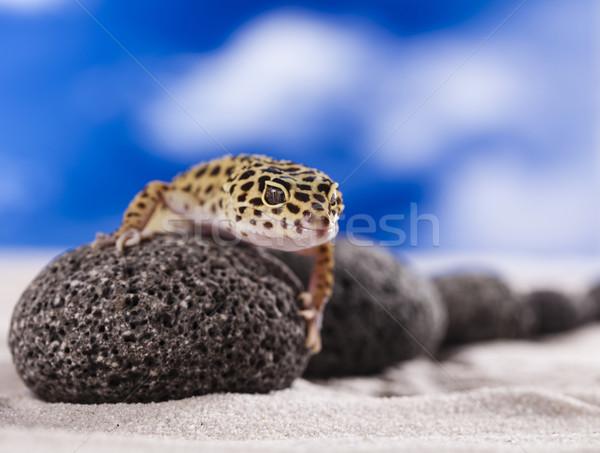 ストックフォト: ヤモリ · は虫類 · トカゲ · 眼 · 白 · 動物