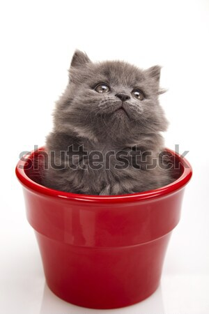 Photo stock: Chaton · blanche · cute · animal · coloré · bébé