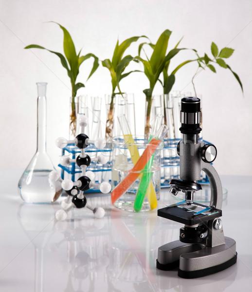 Stock fotó: Növény · kémcső · kezek · tudós · orvosi · élet
