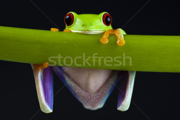 Stock photo: Frog in the jungle on colorful background