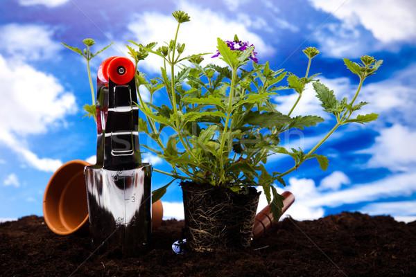 Garden Tools, vivid bright springtime concept Stock photo © JanPietruszka