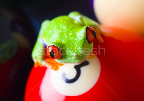Vermelho olho colorido natureza folha Foto stock © JanPietruszka