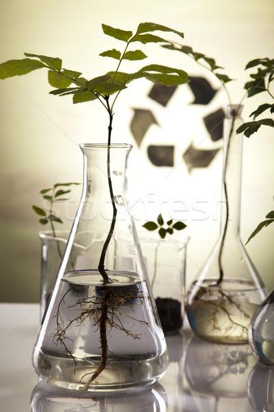 Stockfoto: Ecologie · laboratorium · experiment · planten · natuur · geneeskunde