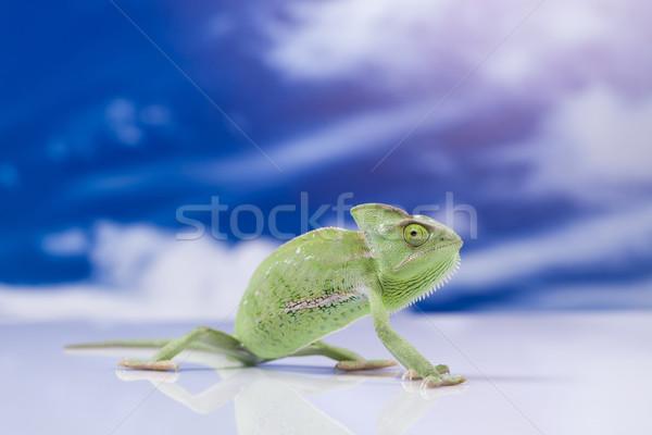 Camaleón cielo azul cruz fondo retrato animales Foto stock © JanPietruszka