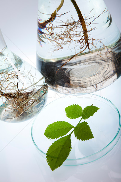 Vegyi laboratórium üvegáru bio organikus modern Stock fotó © JanPietruszka